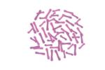 Probiyotik & Prebiyotikler